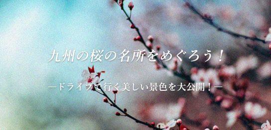 九州の桜の名所をめぐろう!ドライブで行く美しい景色を大公開!アイキャッチ