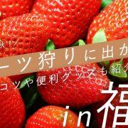 食欲の秋!フルーツ狩りに出かけよう-IN-福岡-コツや便利グッズも紹介